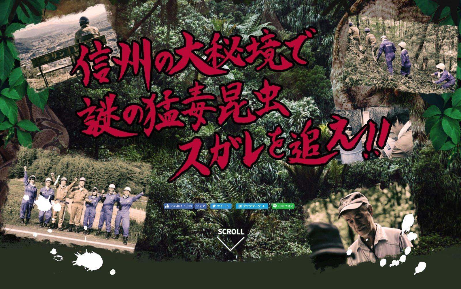 辰野町探検隊 謎の猛毒昆虫、スガレを探せ!